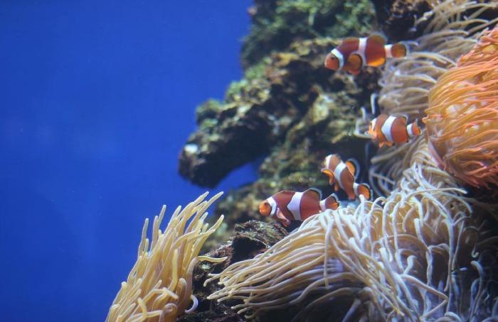 behind the scenes tour waikiki aquarium